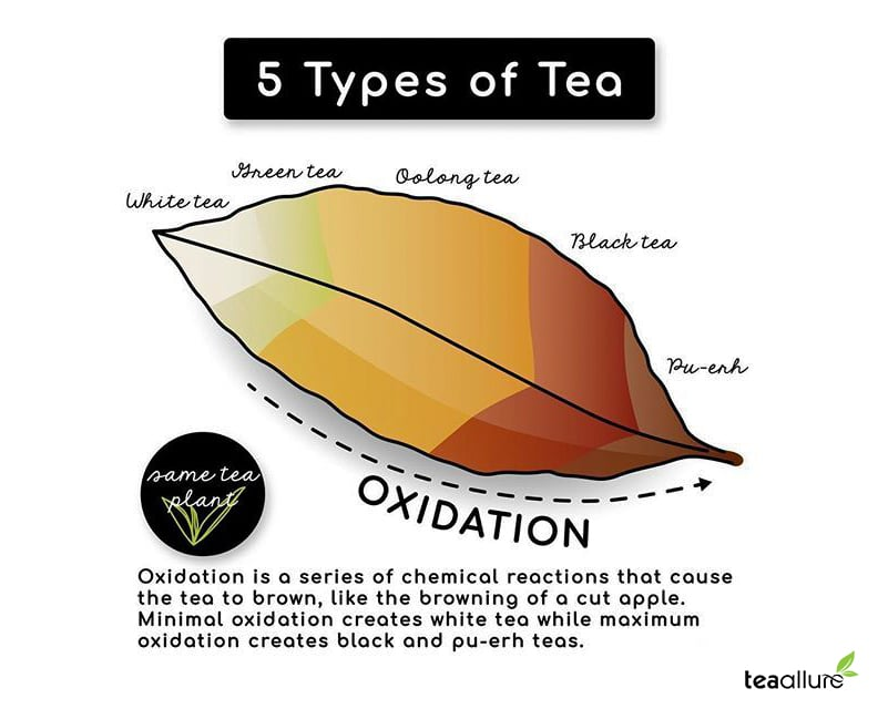 What is Tea Oxidation & Black tea oxydation level