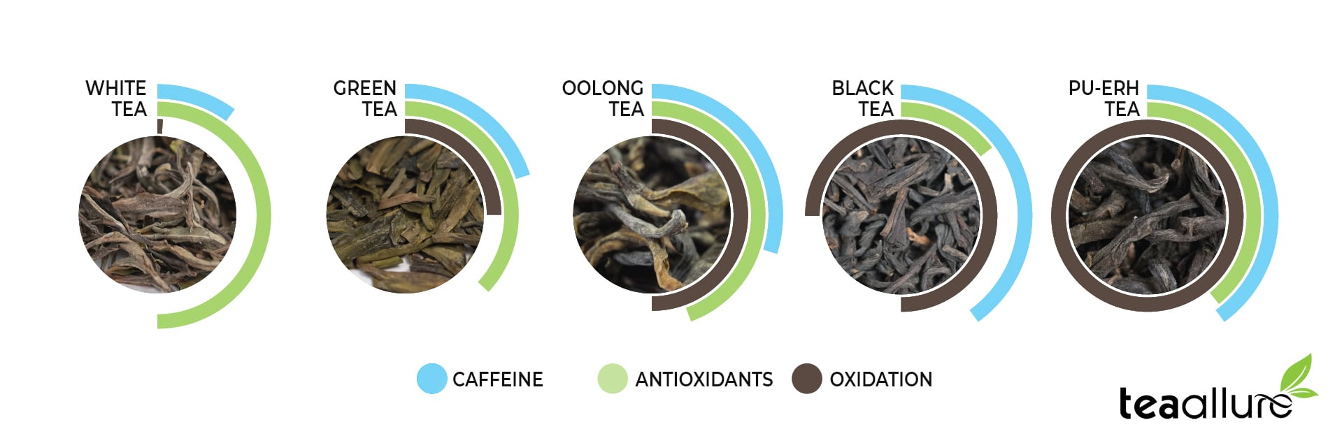 Oxidation and caffeine difference between teas