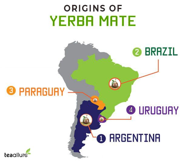 Yerba mate tea origins
